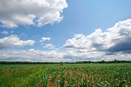 seguro-agricola